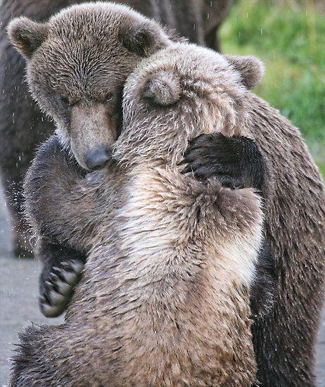 Sometimes we all just need a little Bear Hug