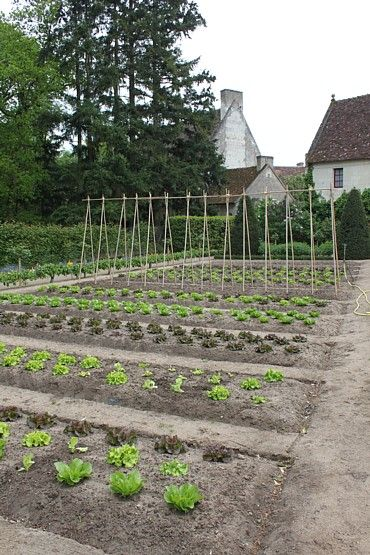 Chenonceau potager garden--I'm in love with this garden. Love the A-frames--would be a wonderful thing for peas/beans.