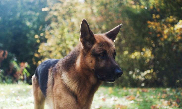Pin Von Lina Luhmann Auf Dogs Hunde