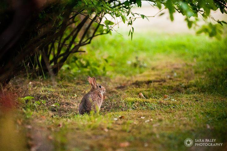 @sarapaleyphoto #paleypix #rabbit #bunny portrait photography, burnaby portrait photographer, sara paley photography, natural light, lifestyle photographer, langley field at sunset, lifestyle portraits, vancouver portrait photography