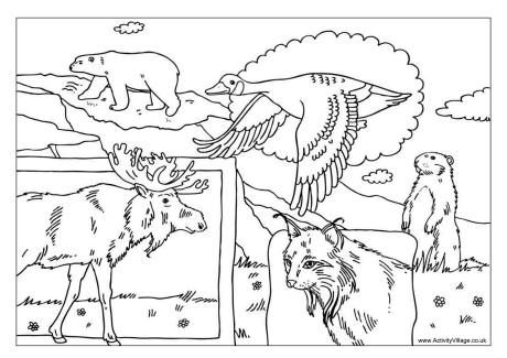 Canadian animals colouring page