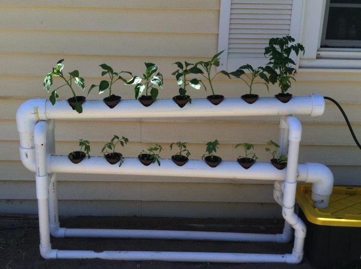 DIY NFT hydroponics around $100 week 1 | DIY Hydroponic Greenhouse .