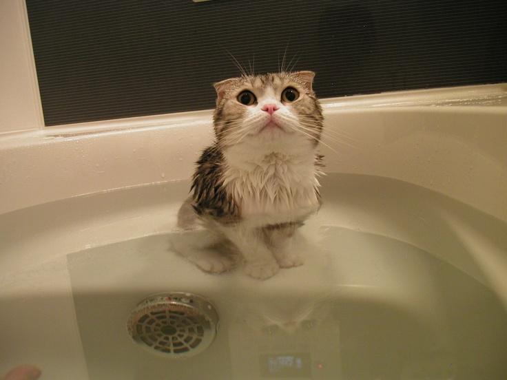 Cute cat: Cute Kitty, Pet Today, Http Petstoday Tumblr Com, Cute Cat, Crazy Cat, Kitty Catz, Funny Animal, Cat Lady, Wet Kitty