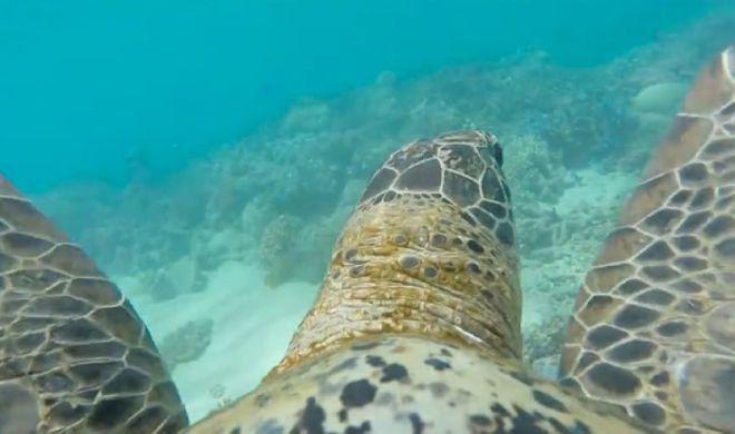 La Grande Barriera Corallina vista con gli occhi di una tartaruga marina