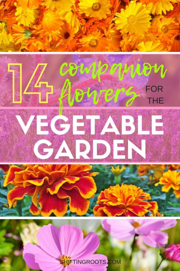 Flowers And Vegetables Belong In The Garden Together I Ll Show