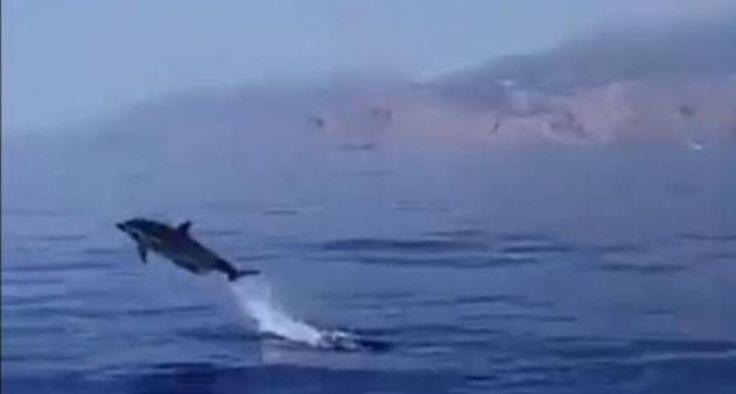 Βόλτα με το σκάφος παρέα με... δελφίνια - ΒΙΝΤΕΟ