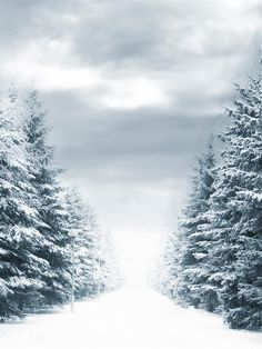 I have a passion for snow no matter where it is or how cold it gets...bring it on it's so marvellous...