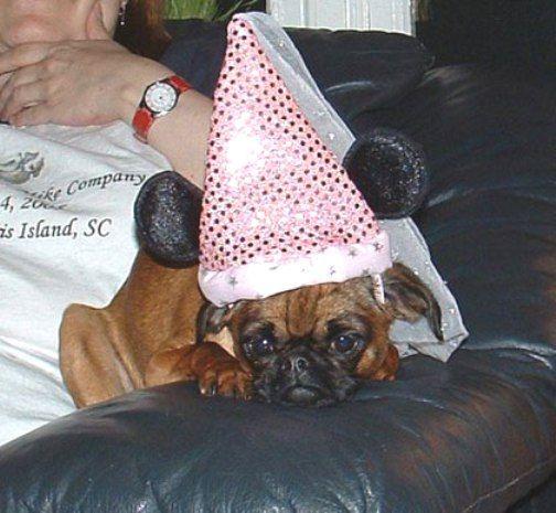Dog Birthday Meme | Pics Photos - Birthday Meme Dog Birthday Tongue Dawg