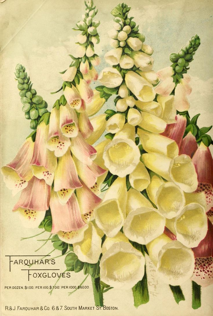 Garden Flower Art 2587 best vintage art-flowers images on pinterest | vintage