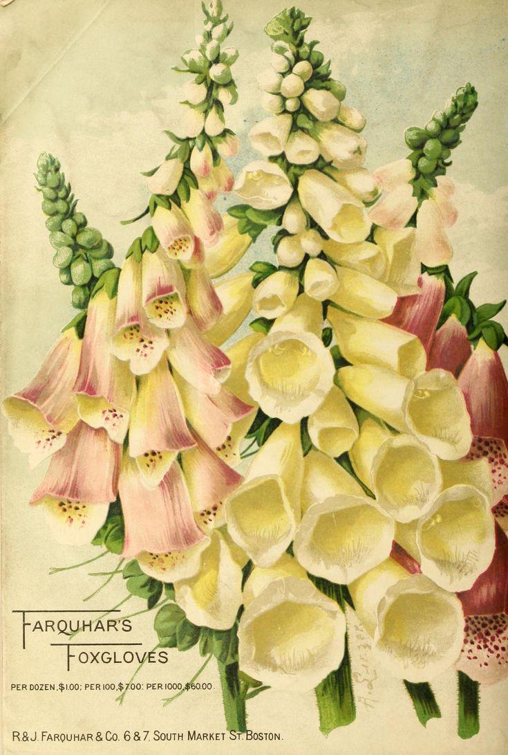 Farquhar's Garden Annual 1907, back cover