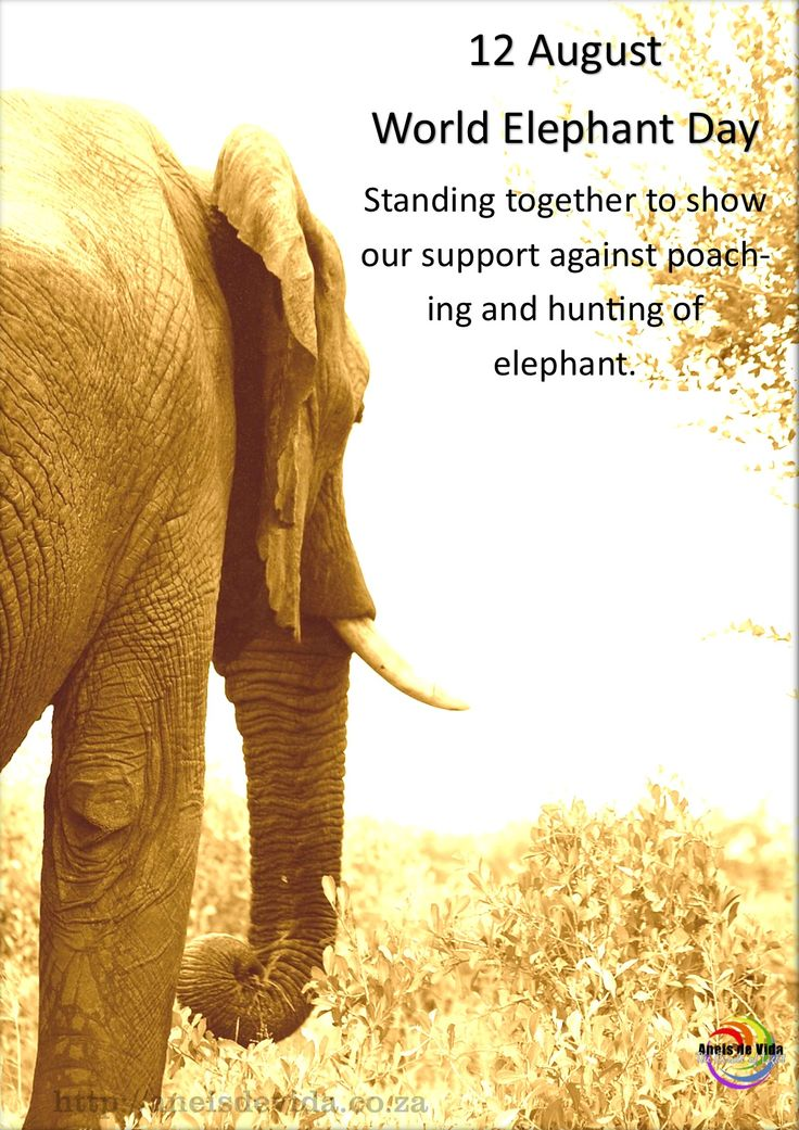 Today is World Elephant Day 12 August 2015 http://aneisdevida.co.za