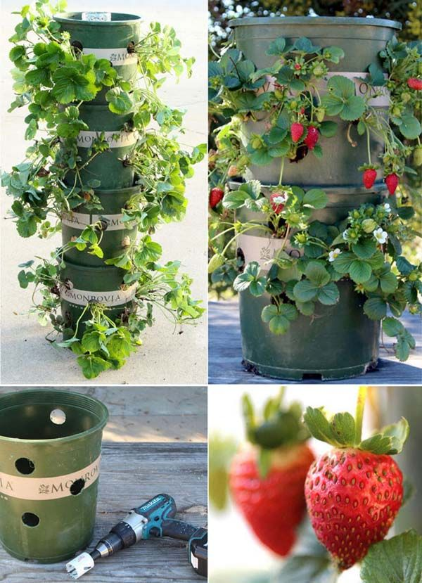15 Creative Ways To Grow Strawberries In Small Spaces Pondic Strawberry Tower Strawberry Garden Plants