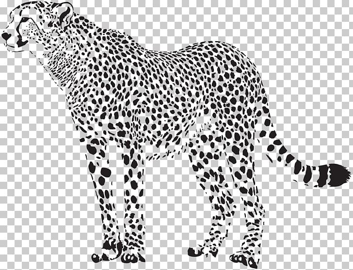 Image Result For Cheetah Svg Free Png Svg