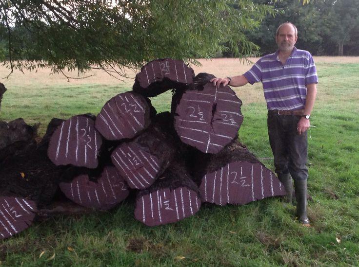 Hamish Low And 2013 Stack Of Bog Oak For Sawmilling Bog
