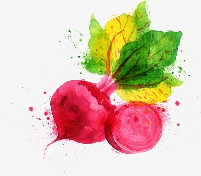 Cartoon aquarelle de légumes, Dessin, Aquarelle, LégumesPNG et vecteur