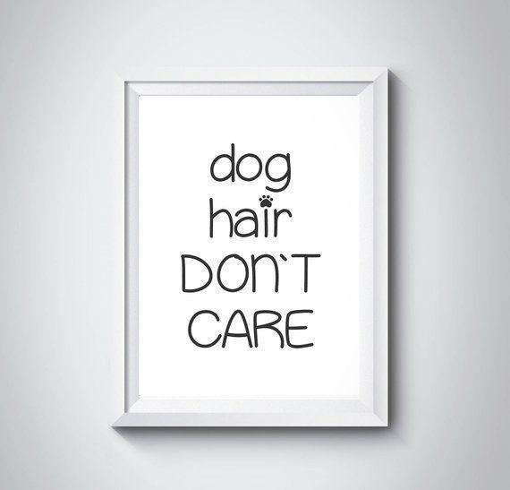 Hundehaare kümmern sich nicht um Hunde lustige Poster Haustiere druckbare Art Home Wall Art Hundehaare …   – Products