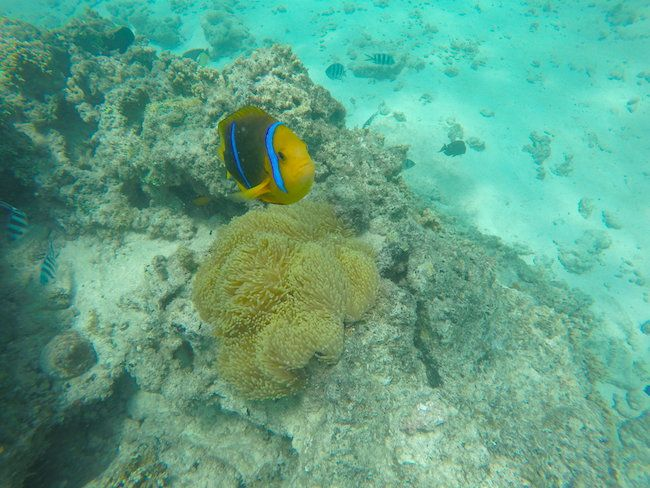 Top 10 Things To Do In Huahine
