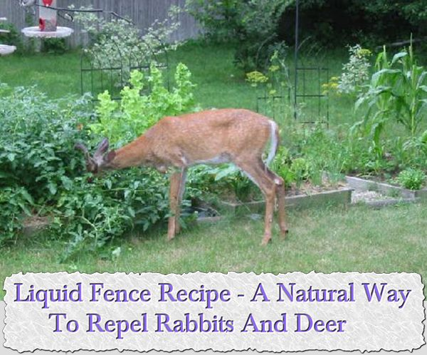 150 best images about garden on pinterest gardens for How to keep deer out of garden fishing line