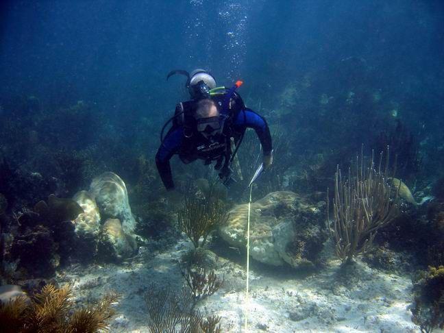 Reef Systems Unit, Puerto Morelos