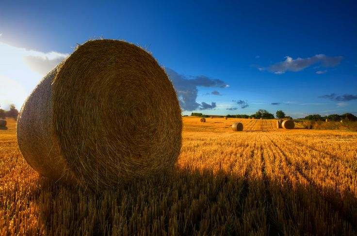 The harvest is in the house by Henrik Palshøj on 500px