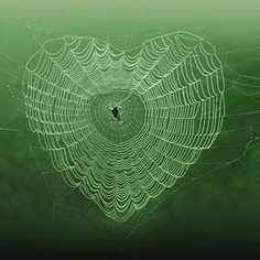 Perfect heart-shaped spider web