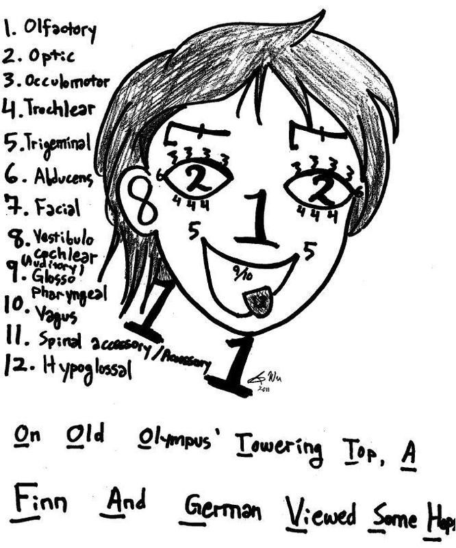 A student has used the numbers 1-12 to draw elements of the human face. Each number corresponds to a specific cranial nerve. For example, the number 1 is used to represent the nose on the face. Each of the twelve numbers also appears in a list next to the face. The number 1 on the list corresponds to the olfactory nerve. The drawing of the face shows the number two in the place where eyes would be found. The number two on the list is shown as the optic nerve. To tie the full list together…