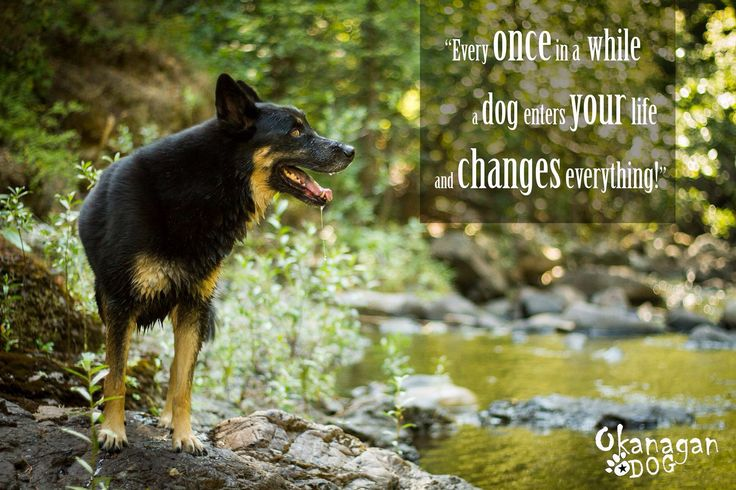 Every once in a while, a dog enters your life and changes everything