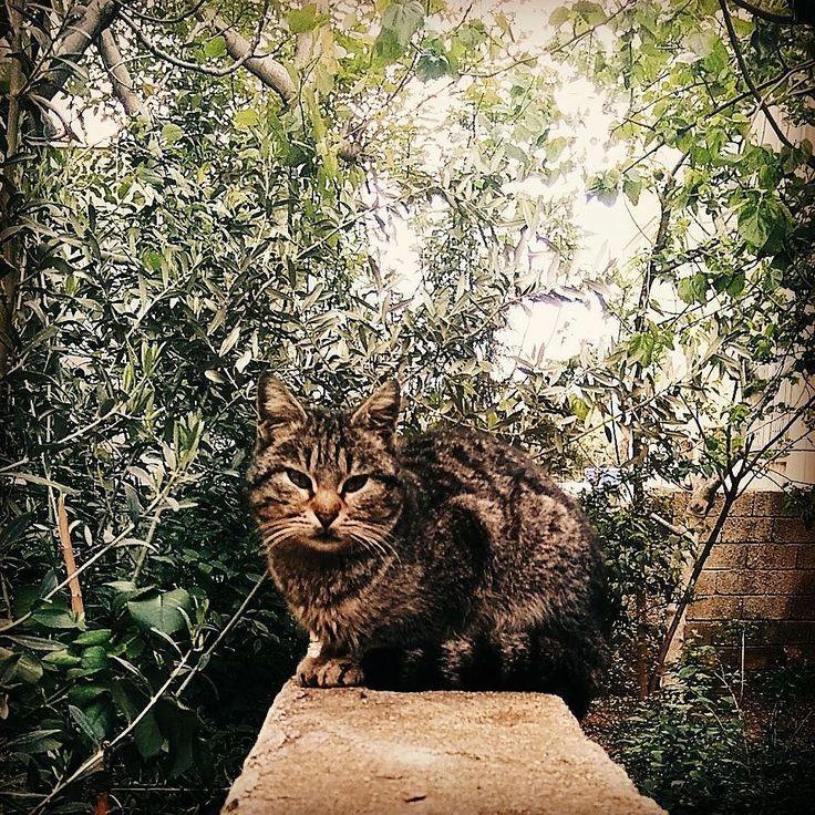 #funny #cat #a #instagood #photography #tb #sweet #guzel #mutluluk #cut #styles #adventure #naturephotography #likeforlikes #art #foodporn #instalikes #say #repost #tagforlike #futbol #girl #instaday #friend #so #picture #selfies #follow4follow #followme #tbt