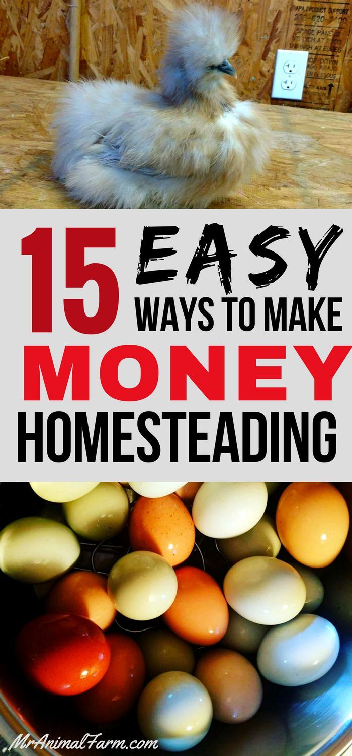 It is easier than you think to make money homesteading. Here are 15 easy tips that will guarantee your homestead will start paying for itself.