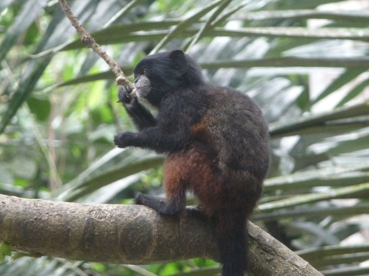 Living among the wonderful animals of the Peruvian Amazon in Esperanza Verde animal rescue centre.