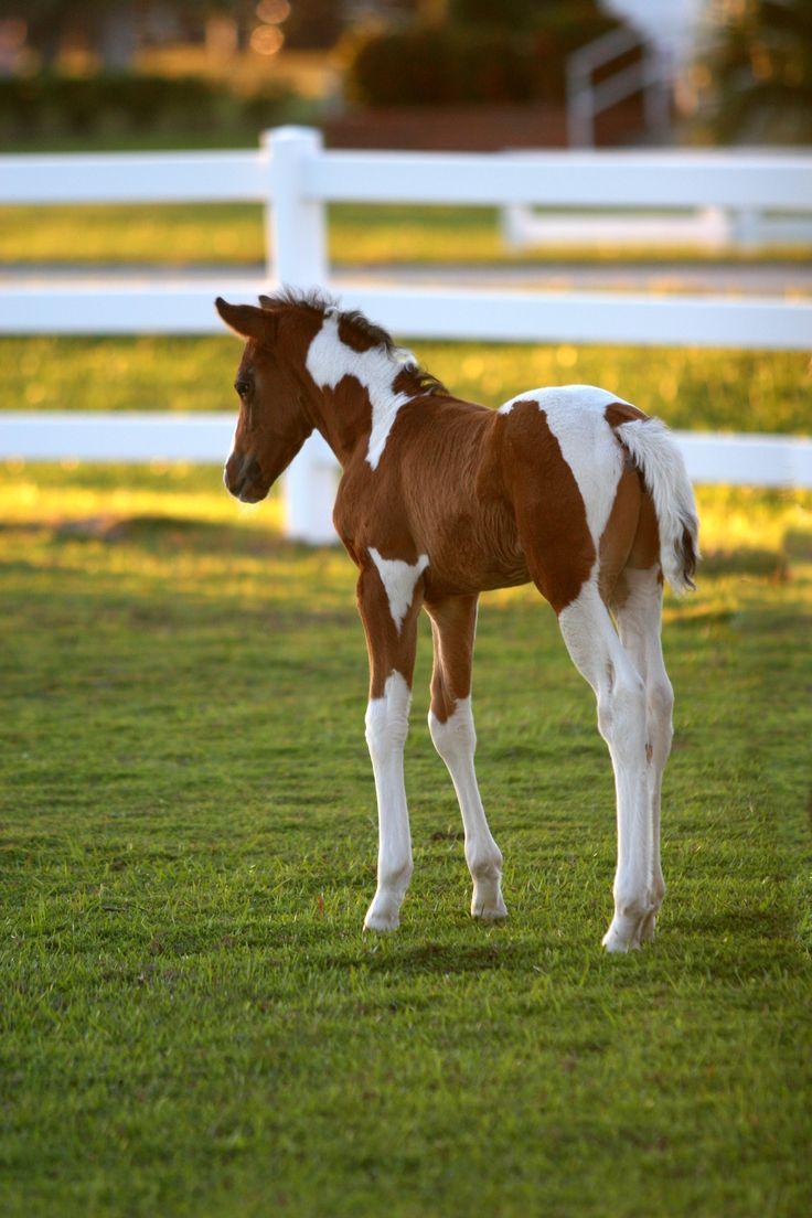 foals - photo #49
