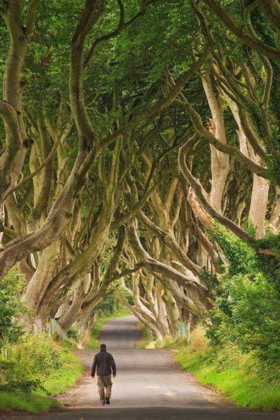 The Dark Hedges, un camino de Game of Thrones (Irlanda del Norte).