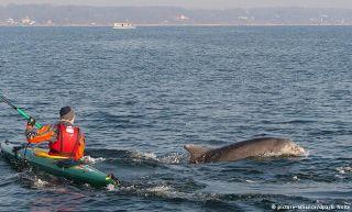 Planet Stars: Περιβάλλον & Επιστήμη- Δελφίνια παίζουν στη Βαλτικ...
