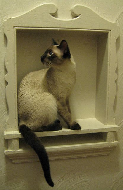 Cute Siamese cat. ...........click here to find out more http://googydog.com