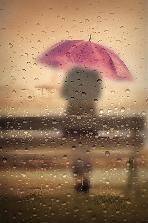I, too, seem to be a connoisseur of rain, but it does not fill me with joy; it allows me to steep myself in a solitude I nurse like a vice I've refused to vanquish •  Julia Glass, Three Junes