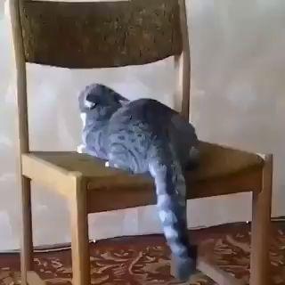 Lustiges Video einer Katze, die mit einem Stuhl spielt!