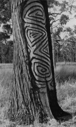 Dendroglyph  Aboriginal carving into a living Callitris tree near Narromine, NSW, 1941. Photo: Lindsay Black.