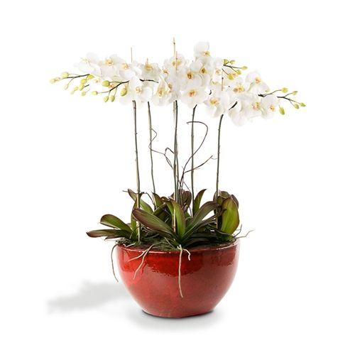 Vaso oval em ceramica vermelha c/orquideas phalaenopsis branca - CeciliaDale