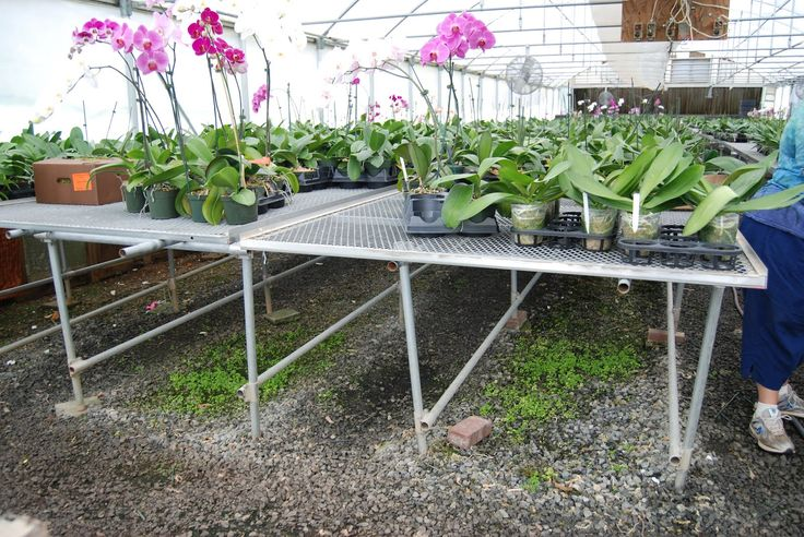 16 Best Images About Greenhouse Benches On Pinterest Greenhouses Asheville And Homemade