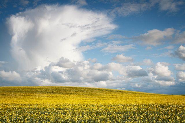 La photo de paysage est sans doute l'un des domaines de spécialitéle plus apprécié avec la photographie de portrait. Vous savez très bien que quiconqueest en mesure de prendre son appareil photo ou son smartphone pour