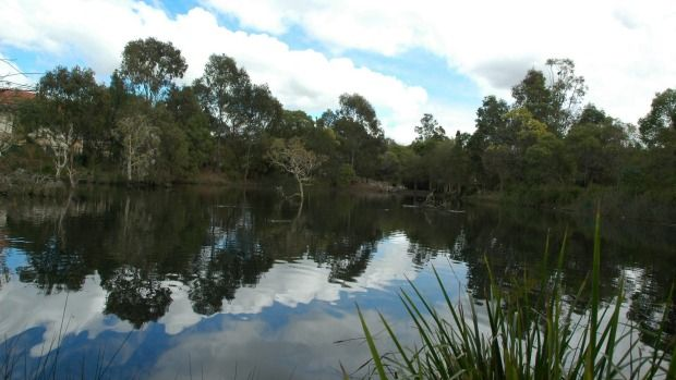 Brisbane 20 best secret spots Bowie's Flat - An artificial wetland plonked right at the rim of Coorparoo's commercial centre, Bowies Reserve is a small and surprising retreat from the bustling revamped shopping centre nearby.