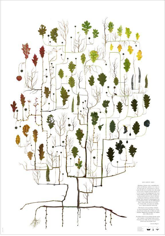 Eken / lottas träd