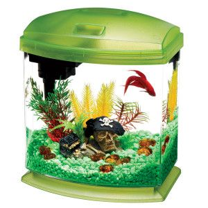 7 best mini fish aquarium tanks images on pinterest fish for Best place to buy betta fish online