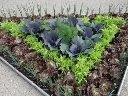 Vegetable Garden Ideas For Spring 97 best edible landscaping images on pinterest | edible garden