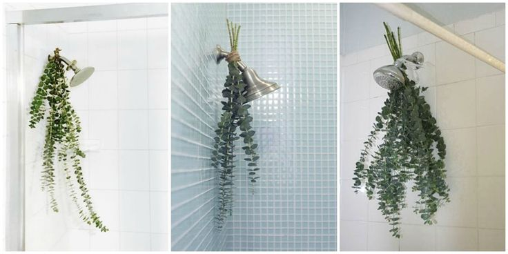 Eucalyptus 'bath bouquets' are the easiest way to make your shower smell amazing