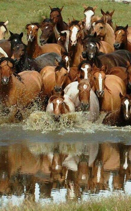 Wild Horses                                                       …