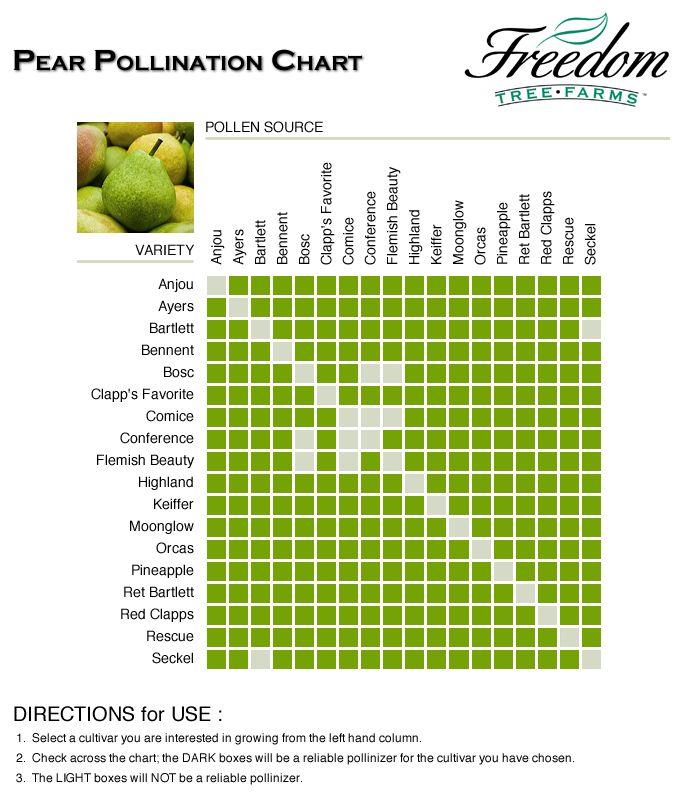 Asian Pear Tree Pollination