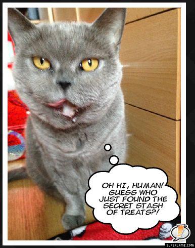 Oh hi, human...