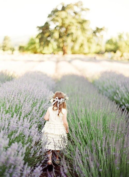 run through lavender fields  france wedding  flower girl  photography