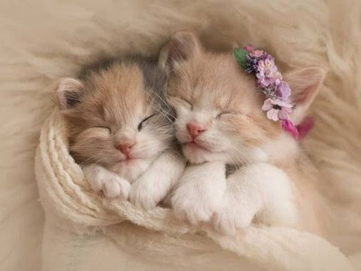 Cute #Cats #videos of cute #kittens and #funny cat - Colecciones - Google+